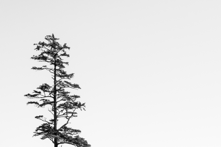 Lone tree perched above Canon Beach, Oregon.  Leica D Lux Typ 109  (1/800s @f8 ISO200)